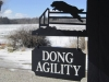 dong-agility-1